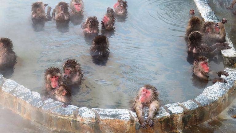サル山温泉(函館市熱帯植物園)