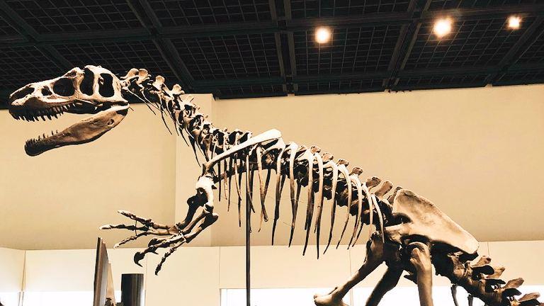 三笠市立博物館 特別展「ポケモン化石博物館」|北海道の「今」をお届け Domingo -ドミンゴ-