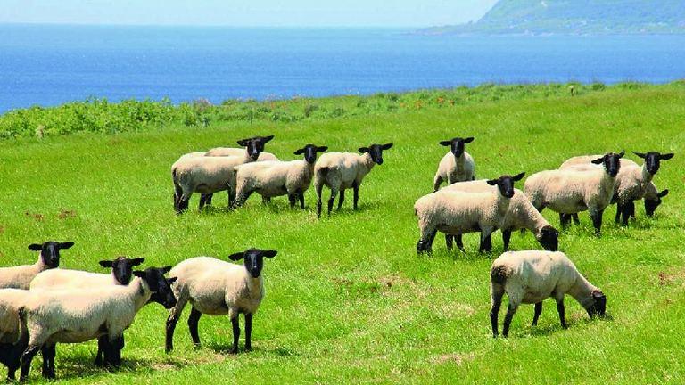 焼尻めん羊まつり2021|北海道の「今」をお届け Domingo -ドミンゴ-