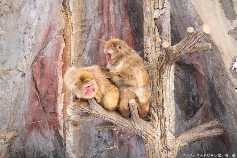 [釧路市動物園]大人の動物園スクール 北海道の「今」をお届け Domingo -ドミンゴ-
