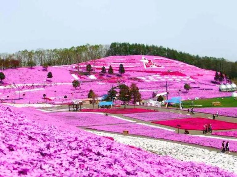 ひがしもこと芝桜公園オープン|北海道の「今」をお届け Domingo -ドミンゴ-