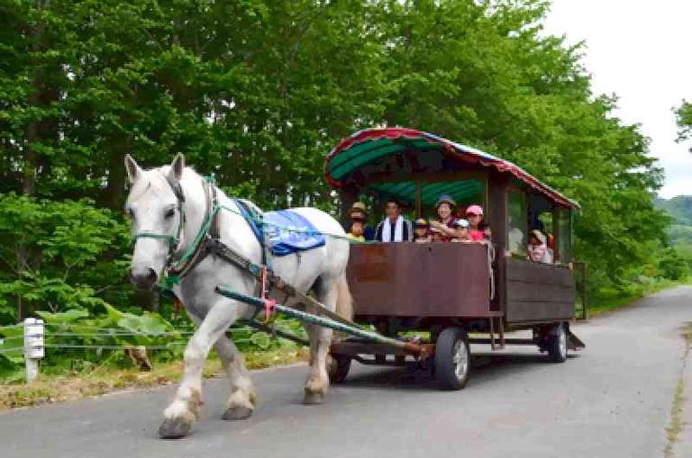 第41回 八千代牧場まつり 【オンライン】|北海道の「今」をお届け Domingo -ドミンゴ-