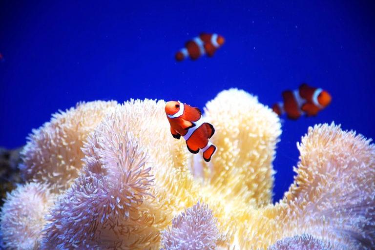 おたる水族館 特別展「蟹(かに)ー誰もが知る生き物カニの生態を探るー」