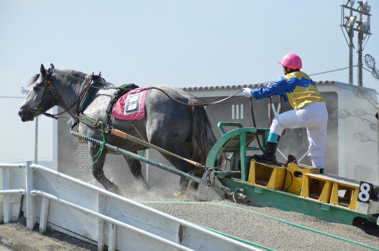 ばんえい競馬|北海道の「今」をお届け Domingo -ドミンゴ-