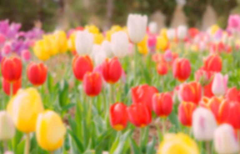 元気なお花を育てよう!セミナー|北海道の「今」をお届け Domingo -ドミンゴ-