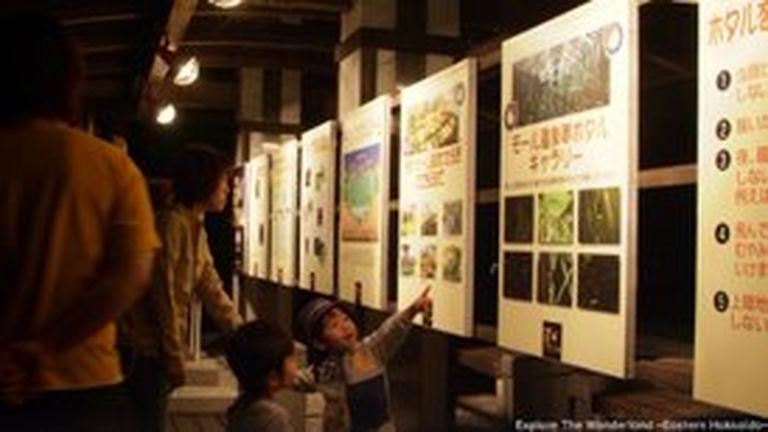 モール温泉夢ボタル鑑賞会|北海道の「今」をお届け Domingo -ドミンゴ-