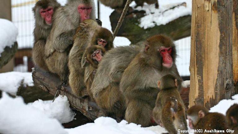 旭山動物園 夏期開園 北海道の「今」をお届け Domingo -ドミンゴ-