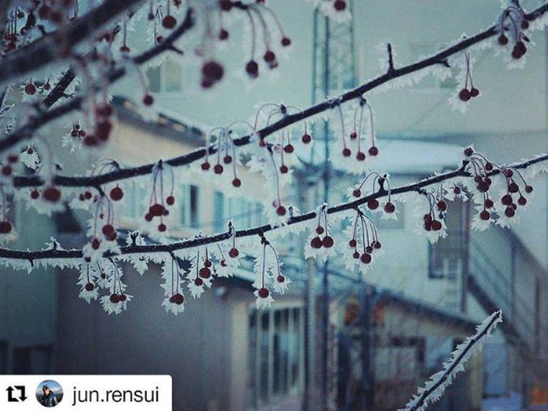 釧路市の霜のついたナナカマドなど【北海道ミライノート(2)】