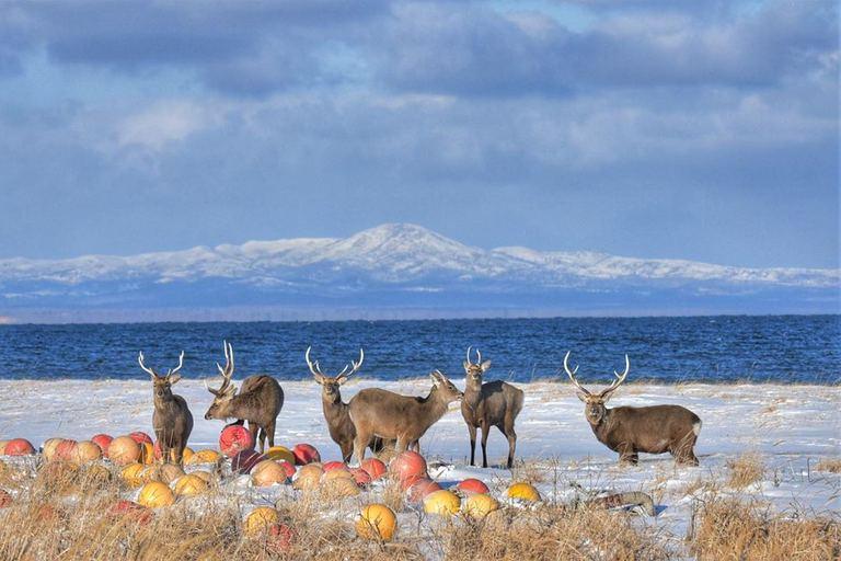 【北海道ミライノート×Domingo】別海町の雄大な風景などhf