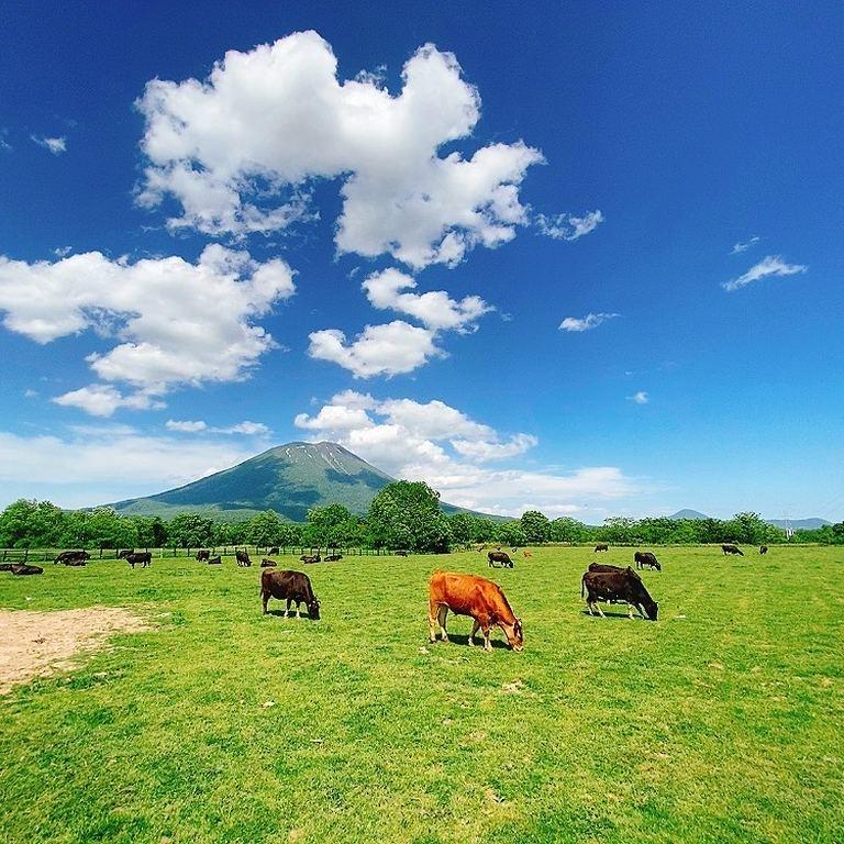 【北海道ミライノート×Domingo】ニセコ町の牧場 など