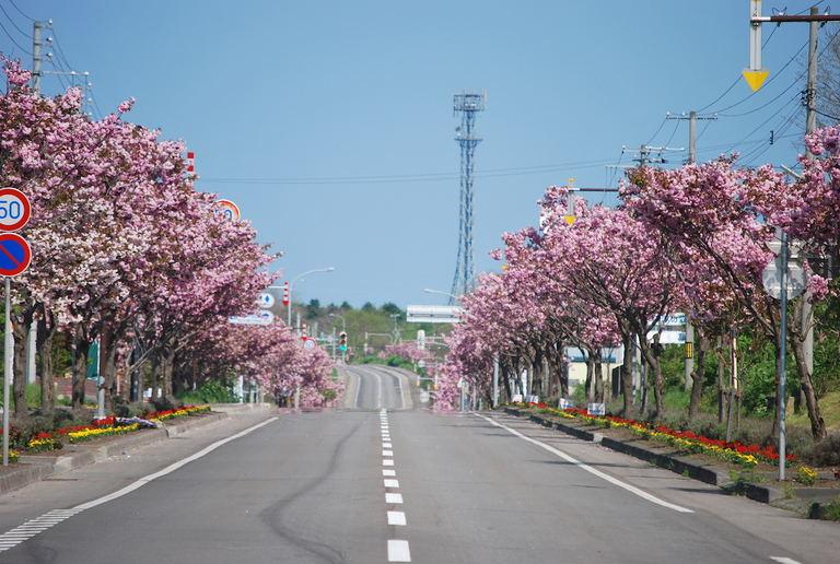 噴火湾と駒ヶ岳を望む、彩りの道【シーニックバイウェイ北海道(8)】|Domingo