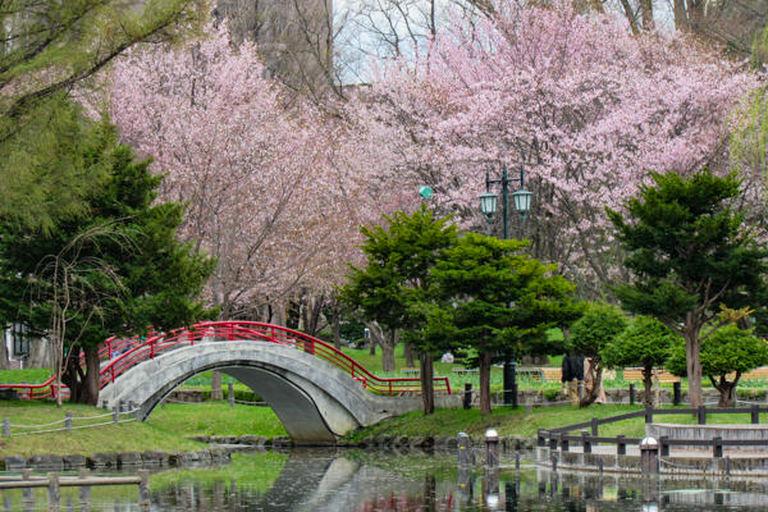 北海道桜スポット5選!アクセスや見ごろ、周辺情報も!|Domingo