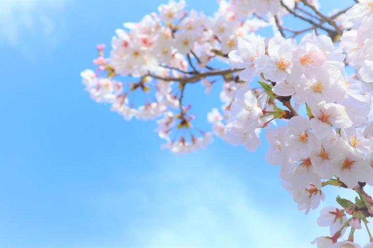 今年の春は近場でたのしもう!北海道エリア別おすすめイベント20選|Domingo