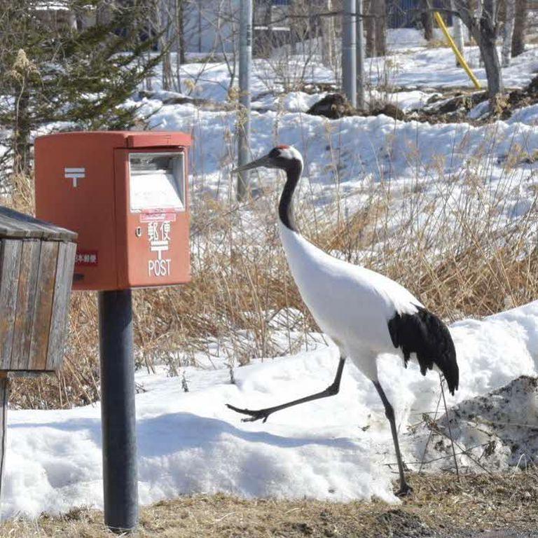 春めく気持ちを手紙にのせて。「鶴とポスト(標茶町)」など 【北海道ミライノート (52)】|Domingo