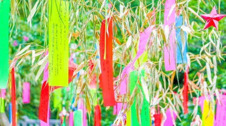 北海道の七夕はなぜ7月でなく8月?今さら聞けない七夕の謎に迫る!|Domingo