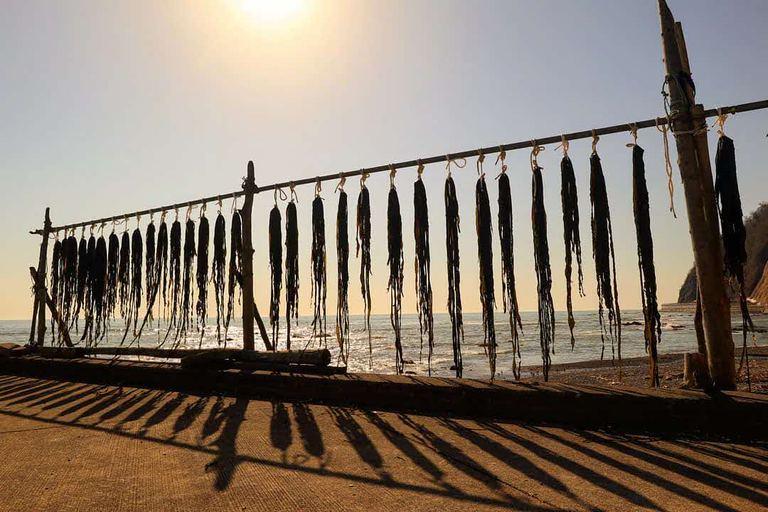 黄金道路沿いに広がる、十勝の昆布漁の風景。「昆布のカーテン(広尾町)」など 【北海道ミライノート (57)】|Domingo