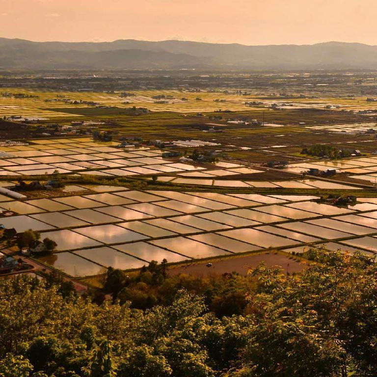 水面に映し出される西日が照らす町並み。「水鏡のような田んぼ(東川町)」など 【北海道ミライノート (60)】 Domingo
