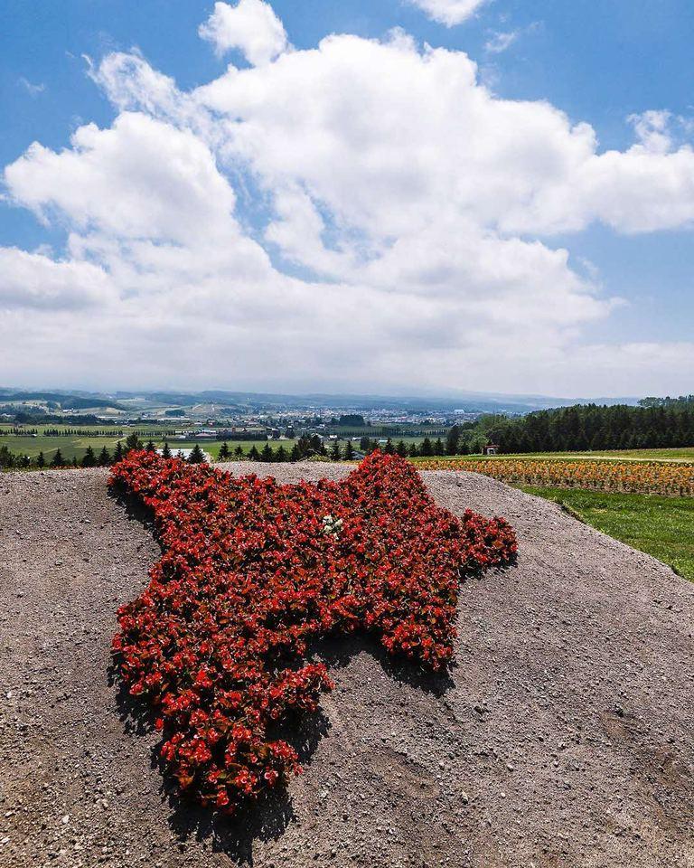 北海道の形をしている花畑。「花で表現した「北海道のへそ」(上富良野町)」など 【北海道ミライノート (63)】 Domingo