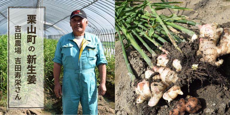 旬を迎えた北海道産の新生姜!栗山町で生姜栽培に挑戦する吉田農場|Domingo