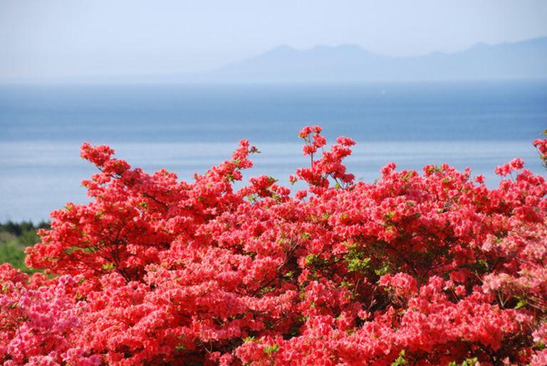 恵山つつじまつり|北海道の「今」をお届け Domingo -ドミンゴ-