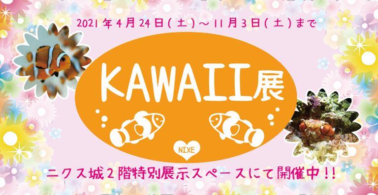 登別マリンパークニクス 特別展示「KAWAII展」|北海道の「今」をお届け Domingo -ドミンゴ-